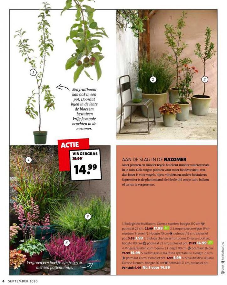 Folder Week 38 . Page 6