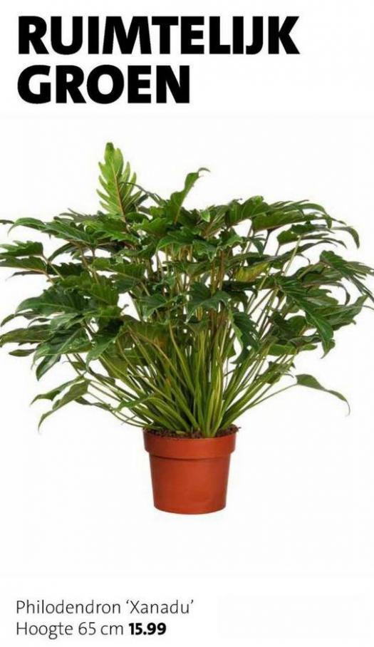 Groene plannen, groene planten . Page 4