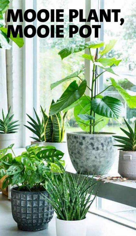 Groene plannen, groene planten . Page 7
