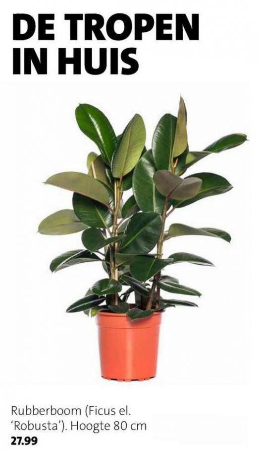 Groene plannen, groene planten . Page 2