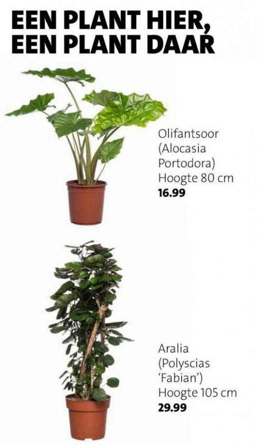Groene plannen, groene planten . Page 3