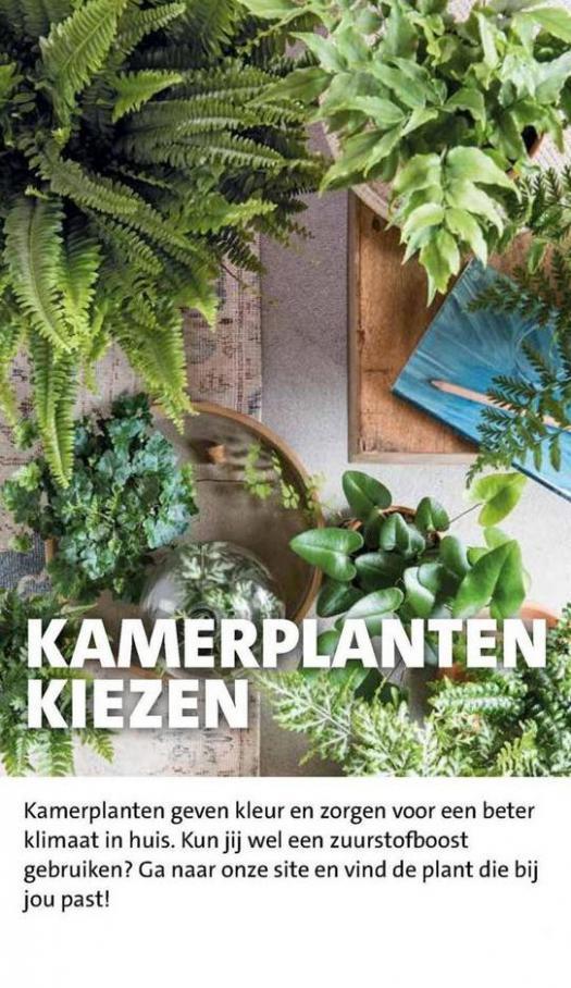 Groene plannen, groene planten . Page 10